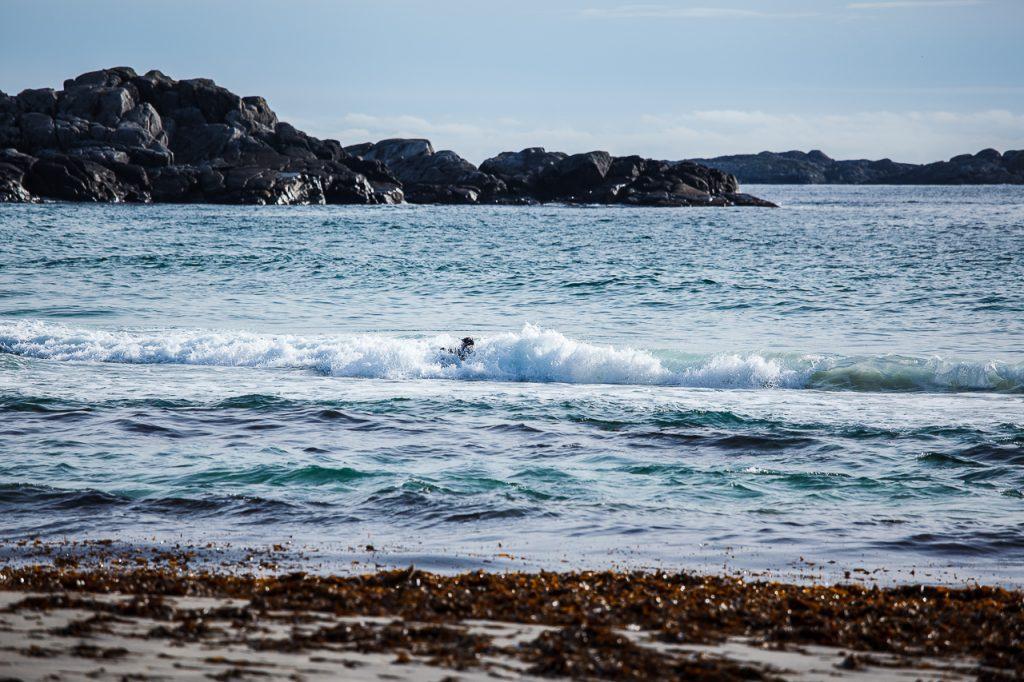 En surfer er omslukt av bølgene på Sandvesand